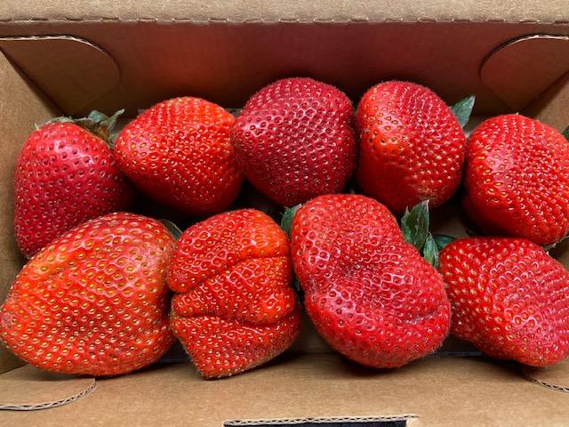 Delicious Driscoll's Organic Strawberries